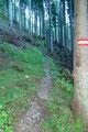 Auf dem teils steilen Weg Nr. 826 ging es durch die Waldzone Richtung eigentlichen Einstieg des Schrabachersteigs.