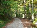 Entlang der Forststraße wanderten wir Richtung Laudachsee mal unter sonnigem, mal unter wolkingem Himmel