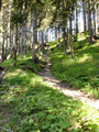 Weiter und weiter führte uns der Steig Nr. 646/608 im Schutz des Blätterdaches schattig bergauf.