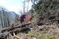 Nichts konnte uns jetzt noch davon abhalten den Gipfel des Holzeck zu erreichen, kein auch noch so großer, umgestürzter Baumstamm.