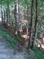 """Der steinige Pfad führte uns zurück über die Wurzel zur nächsten Forststraßen-Querung und dem """"Breuer Franzl Steig"""", den wir nach Gößl abstiegen."""