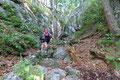 Nach erneutem Überwinden einer felsigen Steilstufe in leichter Kraxltechnik, folgte wiederum ein leicht ansteigendes Gehgelände. Das Wechselspiel zwischen Kletterei und flache bewaldete Abschnitte sorgte für eine gelungene Abwechslung.