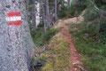Am oberen Ende des Hanges drehte sich der rot-weiß-rote 676er Wanderweg in einem leichten Rechtsbogen einem Waldstück zu. Rasch durchschritten, erreichte ich von Neuen die nach oben führende Schotterstraße. Nun folgte ich dieser, bis …
