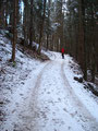 Nach ein paar Metern auf der Forststraße ...