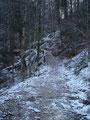 Nachdem aus der Forststraße ein gut angelegter Waldweg geworden ist kamen wir zur ersten markanten Stelle unserer heutigen Tour.