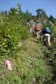 """… und schon ging es für das """"Lustige Wanderquartett"""" erneut steil den Berghang empor."""