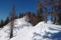 … einem leichten Ab und Auf von Osten her, entlang des Sommerweges über den bewaldeten Kamm dem Salzkammergut-Gipfel entgegen.