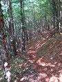 ... mal im Wald, ...