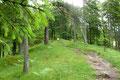 … es anschließend den markierten Karrenweg durch eine grün bewaldete Rinne leicht bergan ging. Etwas weiter oben traf ich auf eine Forststraße, welche ich schnurgerade übersetzte und anschließend der Beschilderung weiter bergwärts folgte.