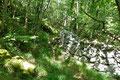 Wiederum entlang markierter Steinmauern ging es nun auf einem Waldpfad der Beschilderung Richtung Knezgrad und Sipicina weiter aufwärts.  Meine Orientierung sagte: Die Richtung stimmte.