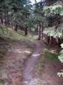 … tauchten mitunter in den Wald ein.