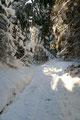 … sprintete voller Elan los. Nachdem der weißbedeckte Wiesenfleck im Sauseschritt überquert wurde, führte mich die breit ausgetretene Spur in den tief verschneiten Wald hinein.