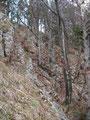Und wieder, Markierung um Markierung kämpften wir uns zwischen den Bäumen bergwärts. Es war aber in jeder Phase des Weges sehr gut zu gehen.