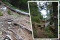 Ziemlich Abwechslungsreich führte der Westgrad-Panoramaweg zwischen Baumbestand, Latschengebüsch und felsigen Steilaufschwüngen bergan.