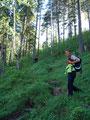 Einige Male eine Forststraße querend, führte uns der weitere Weg einen saftig grünen Waldhang hinauf und …