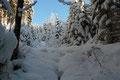 Aufgrund der enormen Schneelast neigten sich die Äste der Nadel- und Laubbäume ziemlich steil nach unten dem Waldboden entgegen.  Kurz gesagt: Ein Wintertraum!