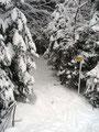 Allerdings folgten wir wieder dem Wanderweg, der gleich gegenüber in den Wald hineinführte.