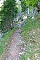 Der gut in die Natur integrierte Waldpfad steilte von Meter zu Meter an und …