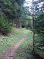 … erneut tauchte ich in den dunklen Wald ein.  Hoppala, plötzlich stand eine Kuh vor mir! Meine Devise: Alles was einen größeren Kopf hat als ich,  vor dem habe ich riesigen Respekt. In einem weiten Bogen umwanderte ich sie und …