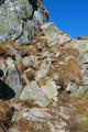 Genug geträumt – ich hatte ja nicht ewig Zeit – darum setzte ich meinen weiteren Aufstieg über einige Felsbänder fort.