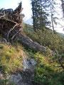 Die letzten Hindernisse umgangen wurde der Wald weniger, und nur die Latschen säumten fortan unseren Weg.