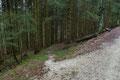 Etwa 500m weiter des Weges folgten wir der örtlichen Beschilderung und den ÖAV-Markierungen rechts entlang in den Wald, …