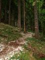 Anschließend führte mich der schottrige Waldsteig leicht ansteigend weiter empor  und dann in einem Bogen nach links.