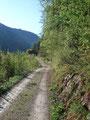Wir wanderten ein paar Meter eine leicht ansteigende Forststraße entlang ...