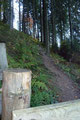 Ein dort befindliches kleines Gatterl (Durchgang) führte mich in den dichten Baumbestand des Hochwaldes.