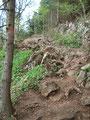 Weiter ging es bergab, über Wurzeln und Steine, unserem Ausgangspunkt entgegen.