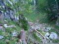 Der Wald lichtete sich und das Gelände wurde wurzeliger und felsiger.