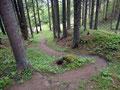 Wir nahmen die eine oder andere Abzweigung durch den Wald um nicht alle restlichen Meter auf der Forststraße wandern zu müssen.