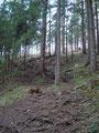 Nach einer kurzen flachen Passage wanderten wir über unzählige Wurzeln in den Wald hinein.