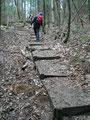 ... wurde der Wald wieder lichter. Der zuständige Wegwart hatte hier ganz tolle Arbeit geleistet, wie man gut erkennen kann auf diesem Foto.