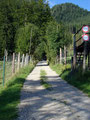 Wir folgten anfangs der Forststraße entlang des Wildgeheges.