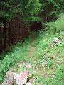 Mal durch Waldgebiet, mal durch Wiesen führte mich der Steig zurück zum Ausgangspunkt.