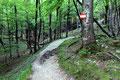 … dann weiter durch das schattige Blätterdach des Waldes, …
