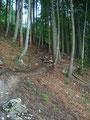 ... bevor es in Serpentinen moderat steigend weiter durch den Wald ging.
