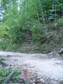 Das Waldstück überwunden, stand ich schon wieder vor der Forststraße. Schnell drüber, die Stufen empor.
