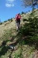 Bereits wenige Meter weiter des Weges verließen wir den dichten Baumbestand und querten eine steile Wiesenflanke oberhalb des Gamskars.