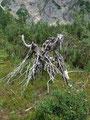 Am Wegesrand dahin, stand diese Baumspinne.