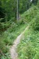 In weiterer Folge präsentierte sich der Streckenabschnitt als ziemlich abwechslungsreich. Steilen Passagen folgten flachere Teilstücke im bewaldeten Gebiet, bevor …
