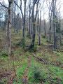 Von nun an ging es aber wieder durch einen Mischwald bergauf.