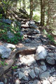 Über unzählige Wurzelgeflechte leitete mich der mäßig steile und steinige Steig in Kehren gipfelwärts.
