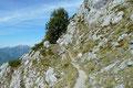 … leitete mich fast eben die sonnige Südflanke des Hochstaufens, dem östlichen Eckpfeiler der Chiemgauer Alpen entlang.