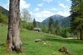 … zum saftig grünen Almboden der Umkehrhütte (865m) mit der nächsten Wegtafel.