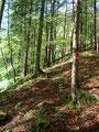 Aus dem Karrenweg wurde sehr bald wieder ein mit viel Laub bedeckter Waldsteig ...
