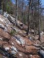 ... und erreichten nach diesem vorläufig letzten schneefreien Stück fast schon die Baumgrenze.