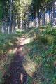Immer mäßig ansteigend führte uns das nett angelegte Wandersteiglein den lichten Bergwald empor.