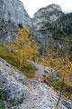 ... unaufhöhrlich den steill aufragenden Felswänden des Wasserfallsteiges näher.